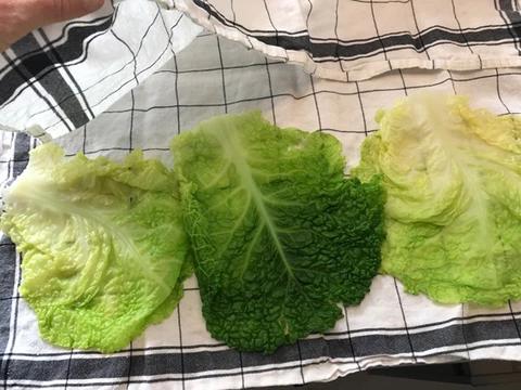 cabbage_img4